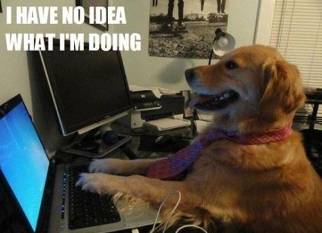 Image d'un chien sur un ordinateur